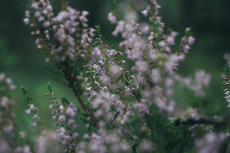 Wild foraging - dried heather tea