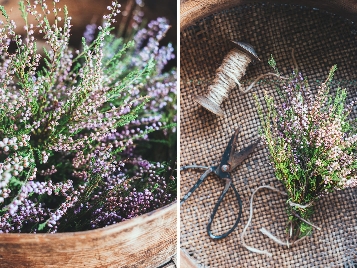 preparing to dry wild heather