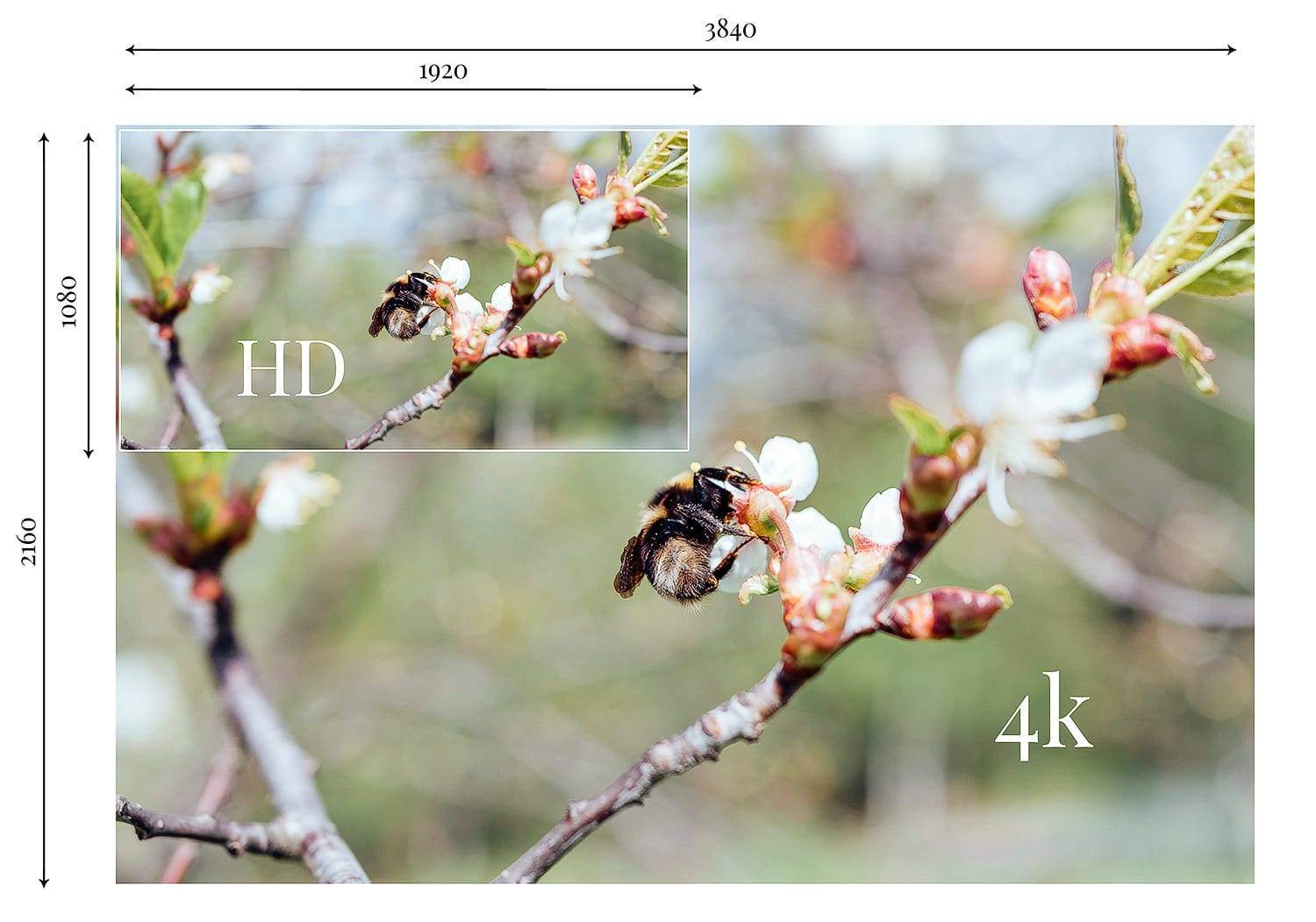An image showing the different between HD and 4K images