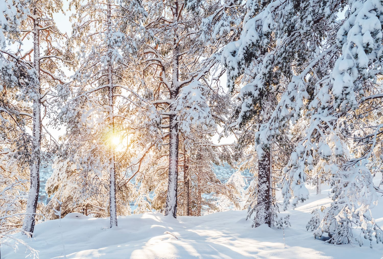 Vinter på norra berget, Sundsvall | Photo © Rania Rönntoft | Northbound Journeys | www.northboundjourneys.com