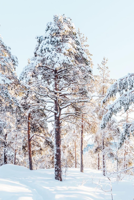 Vinter på norra berget, Sundsvall   Photo © Rania Rönntoft   Northbound Journeys   www.northboundjourneys.com