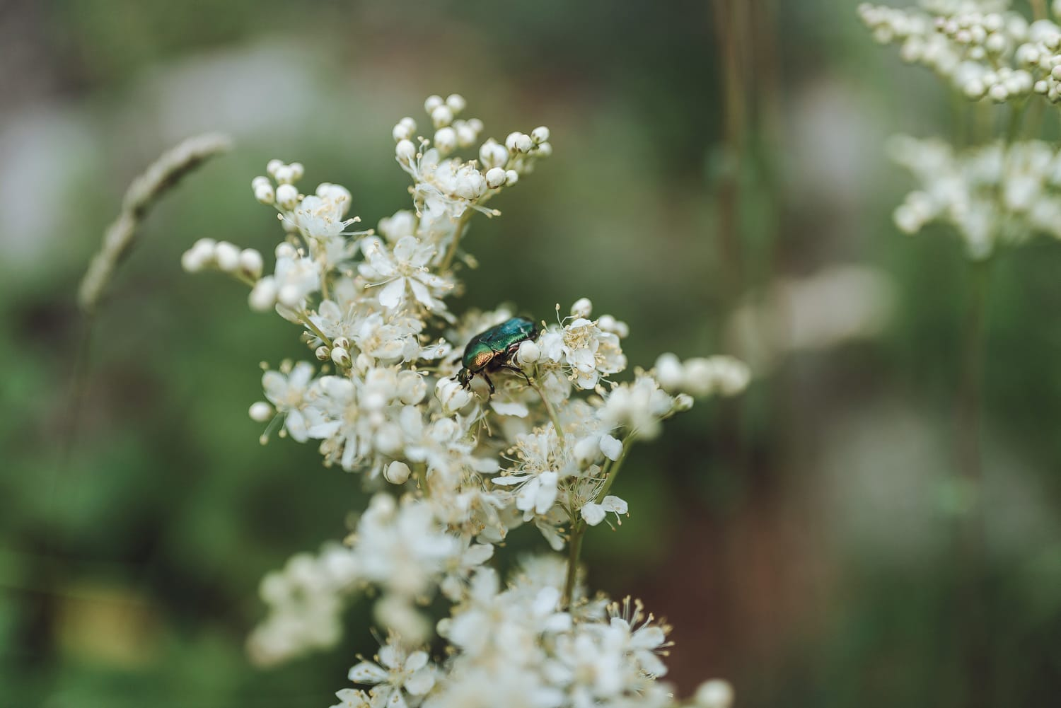 flower with green beetle