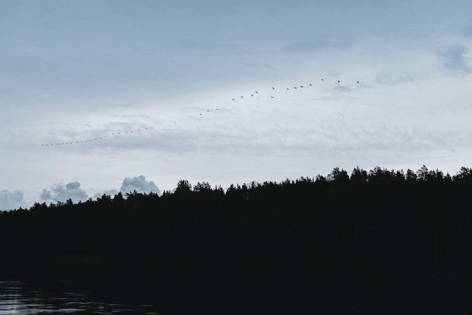 birds flying across the sky