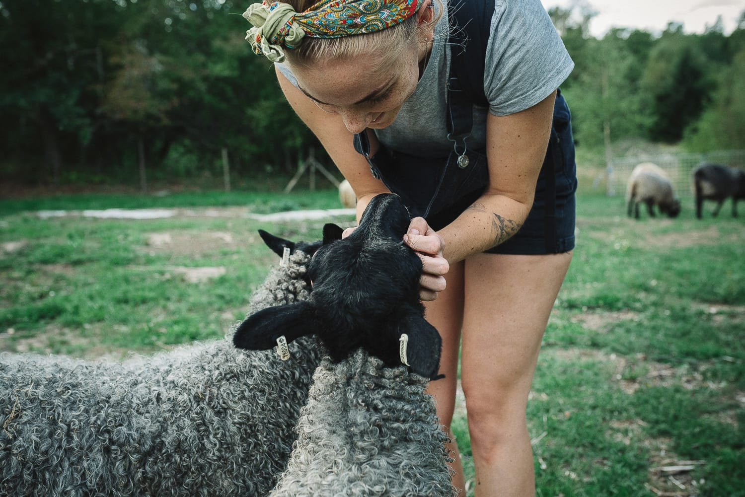 woman petting sheep