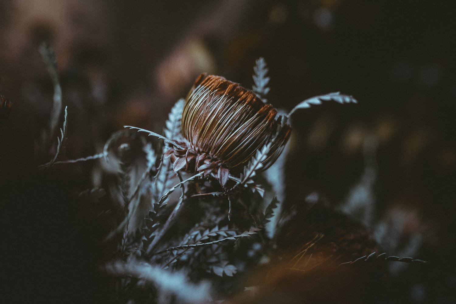 a dried flower in a moody setting