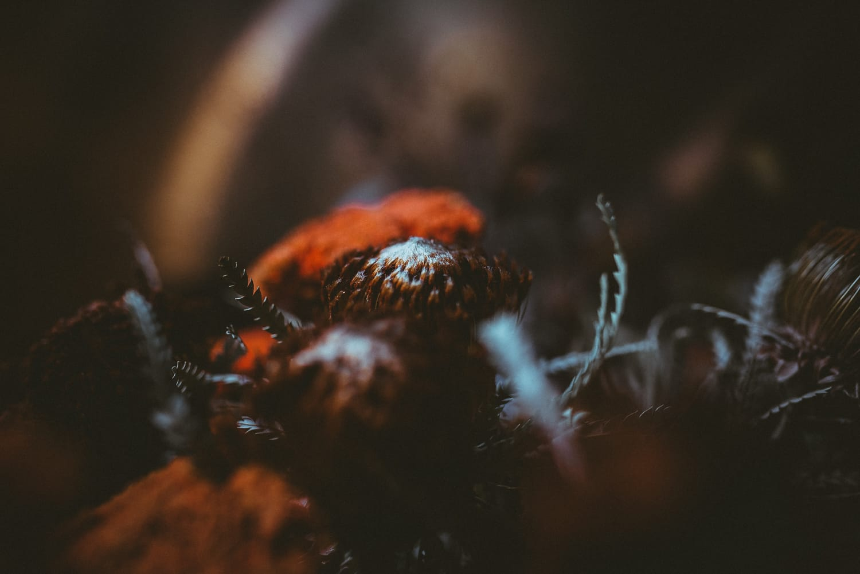 orange dry flower