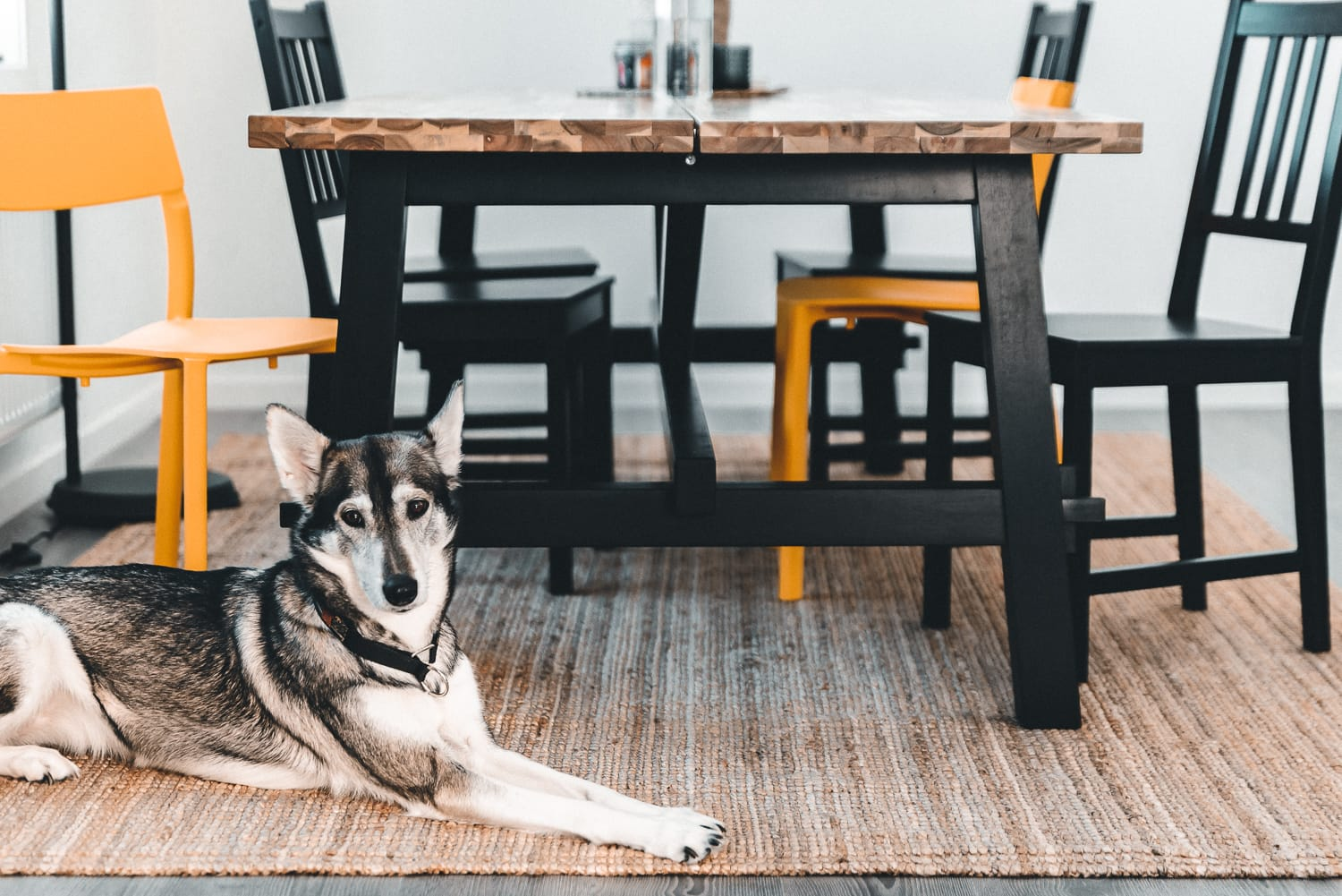 A dog in front of a dinner table