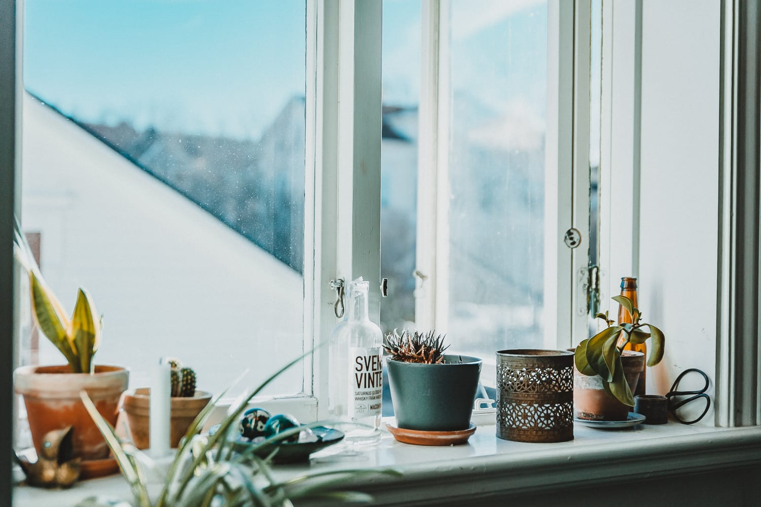 Plants in a sunny window