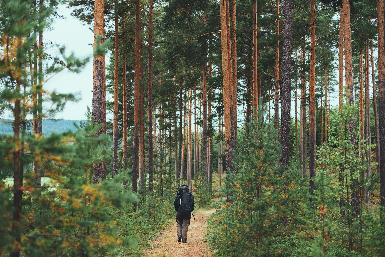hiker walking through a forest in Sweden