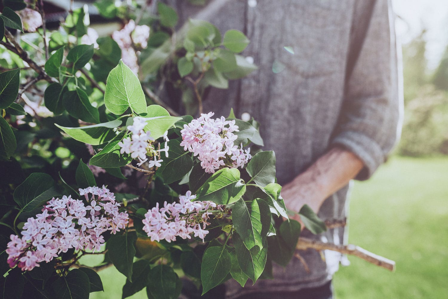 hands holding lilacs