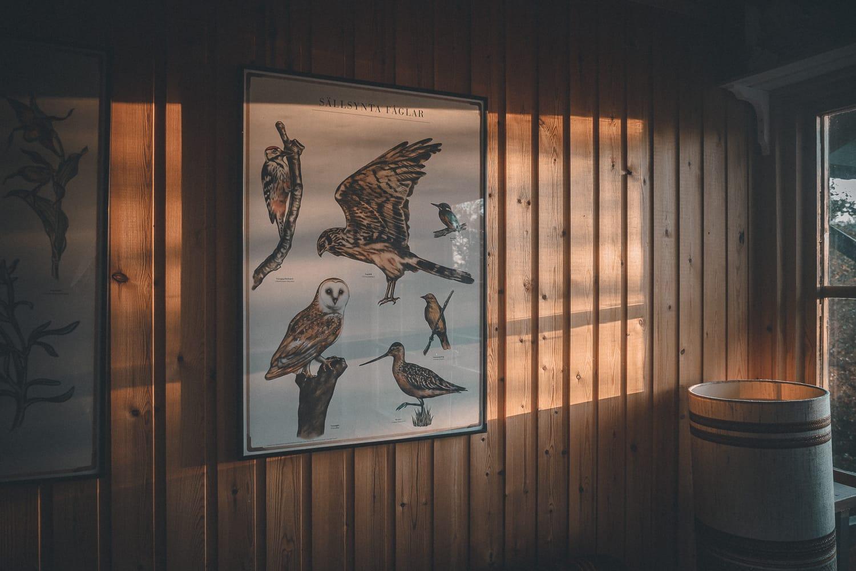 morning sunshine in a cabin