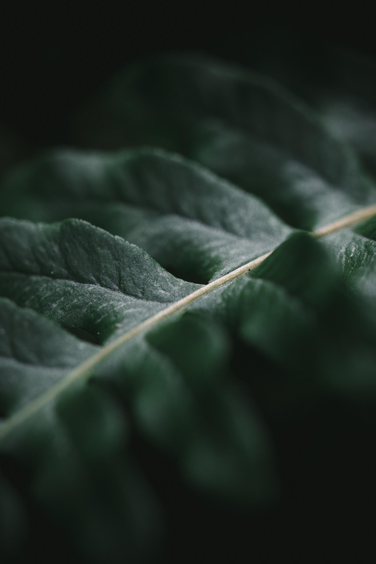 close up of a fern