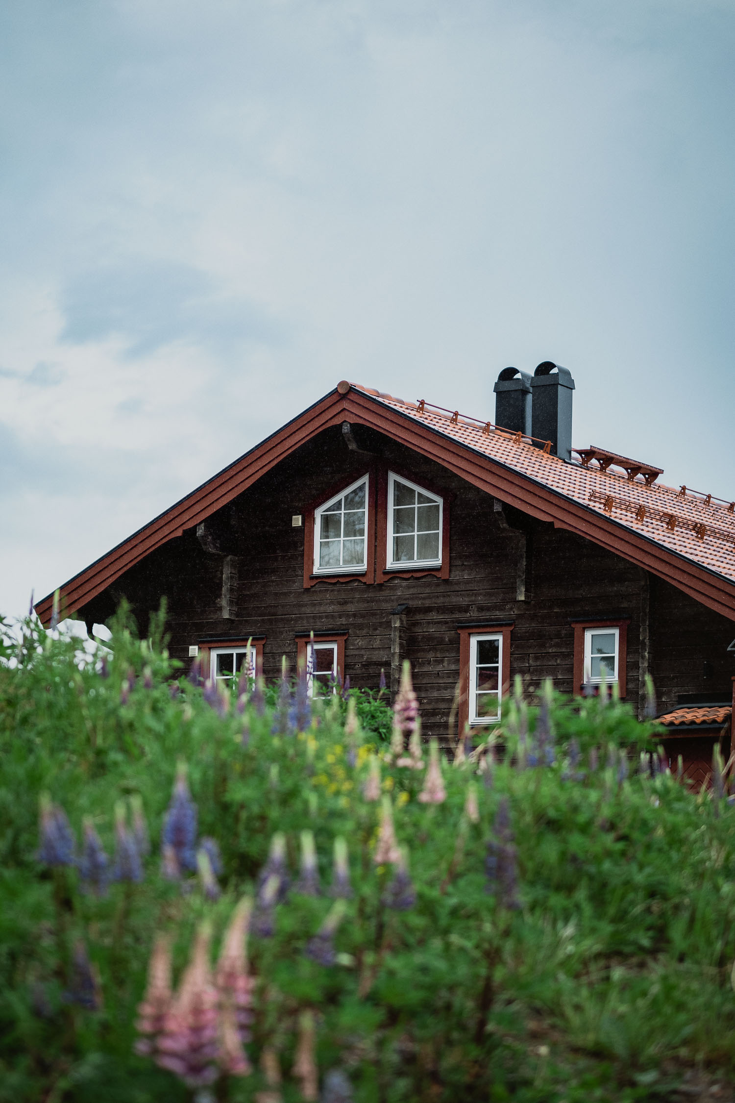 lupins and a cabin