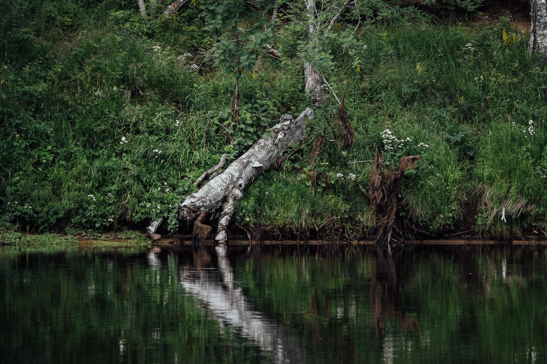 Hälla Naturreservat