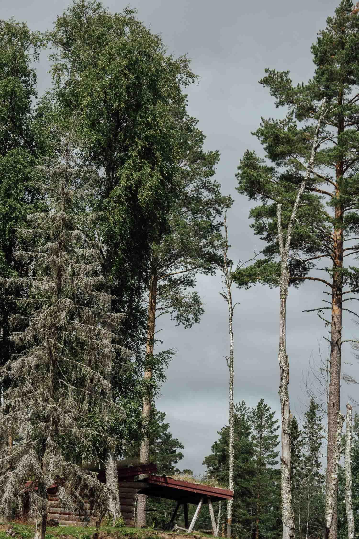 Vindskydd i Hälla Naturreservat