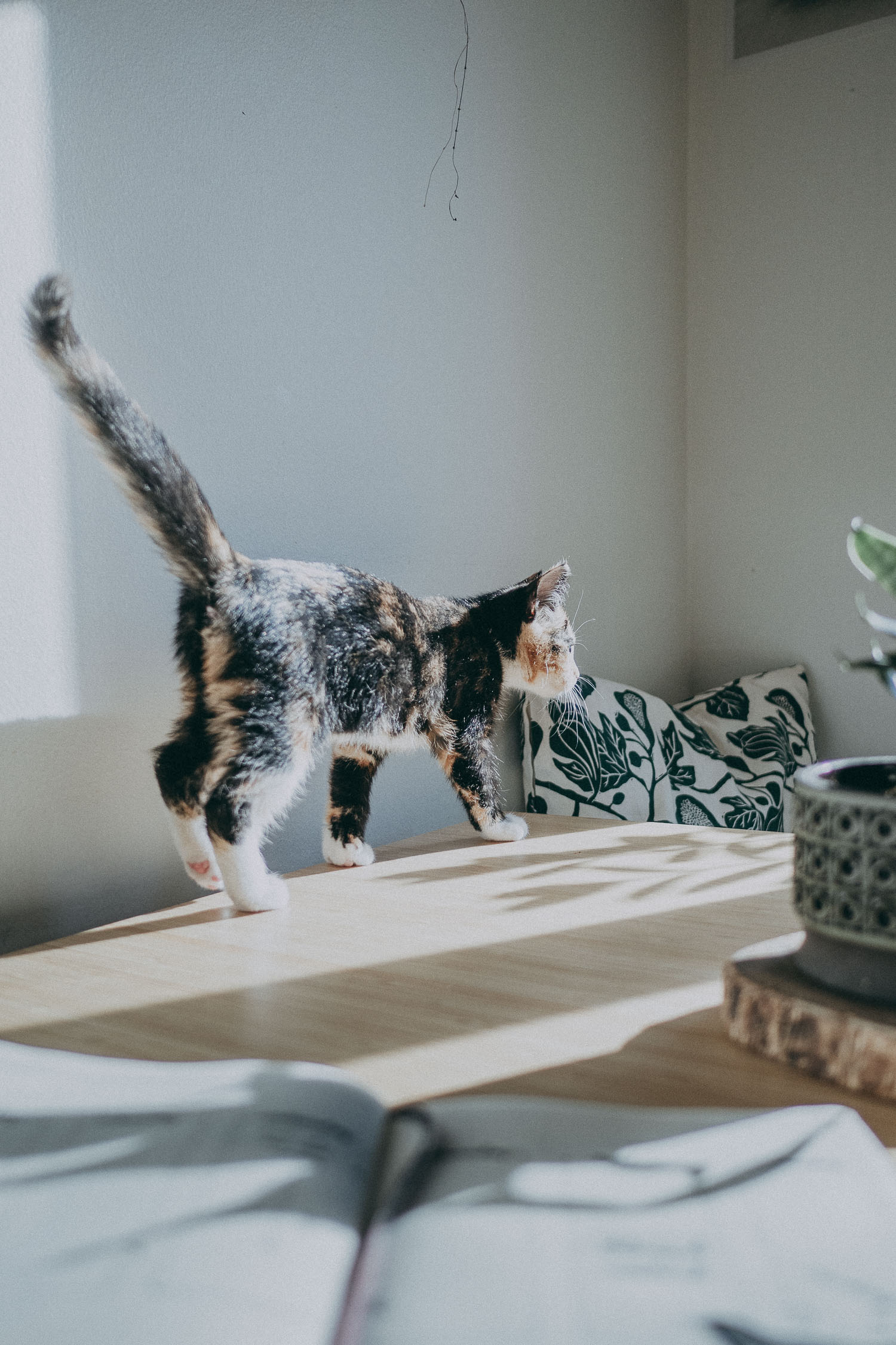 kitten on kitchen table