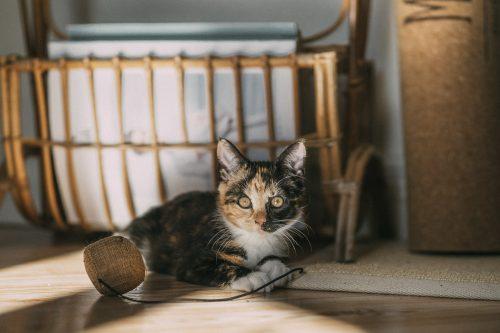 Luci the Cat