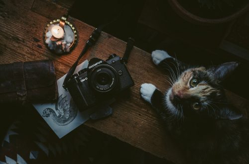 cat and a camera on a bench