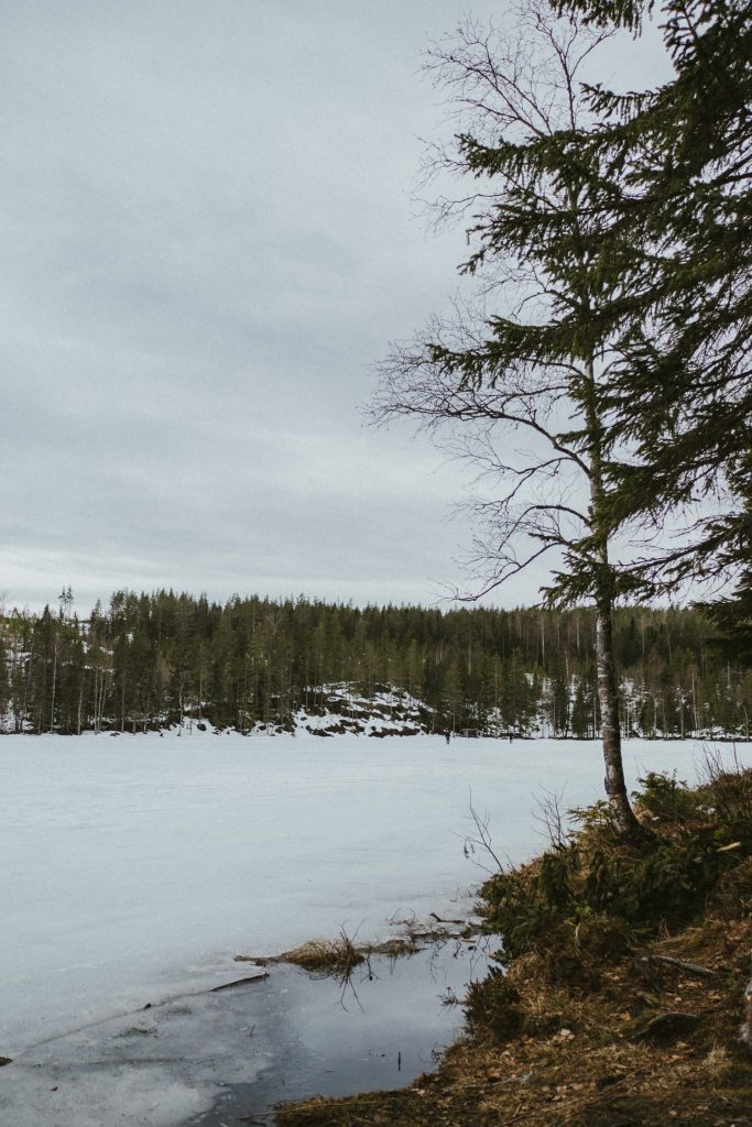 Winter lake in a forest
