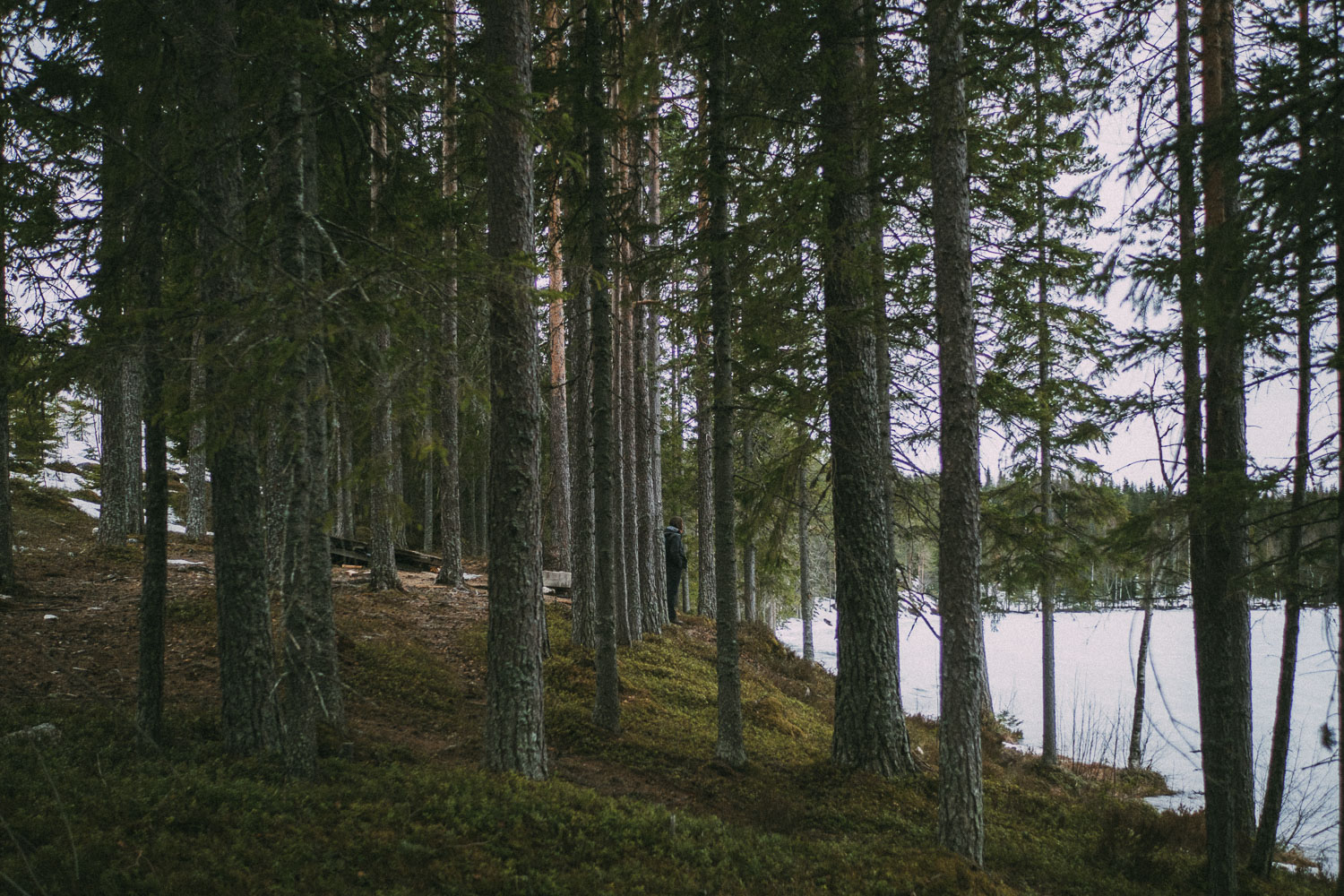Woman by a lake in a forest