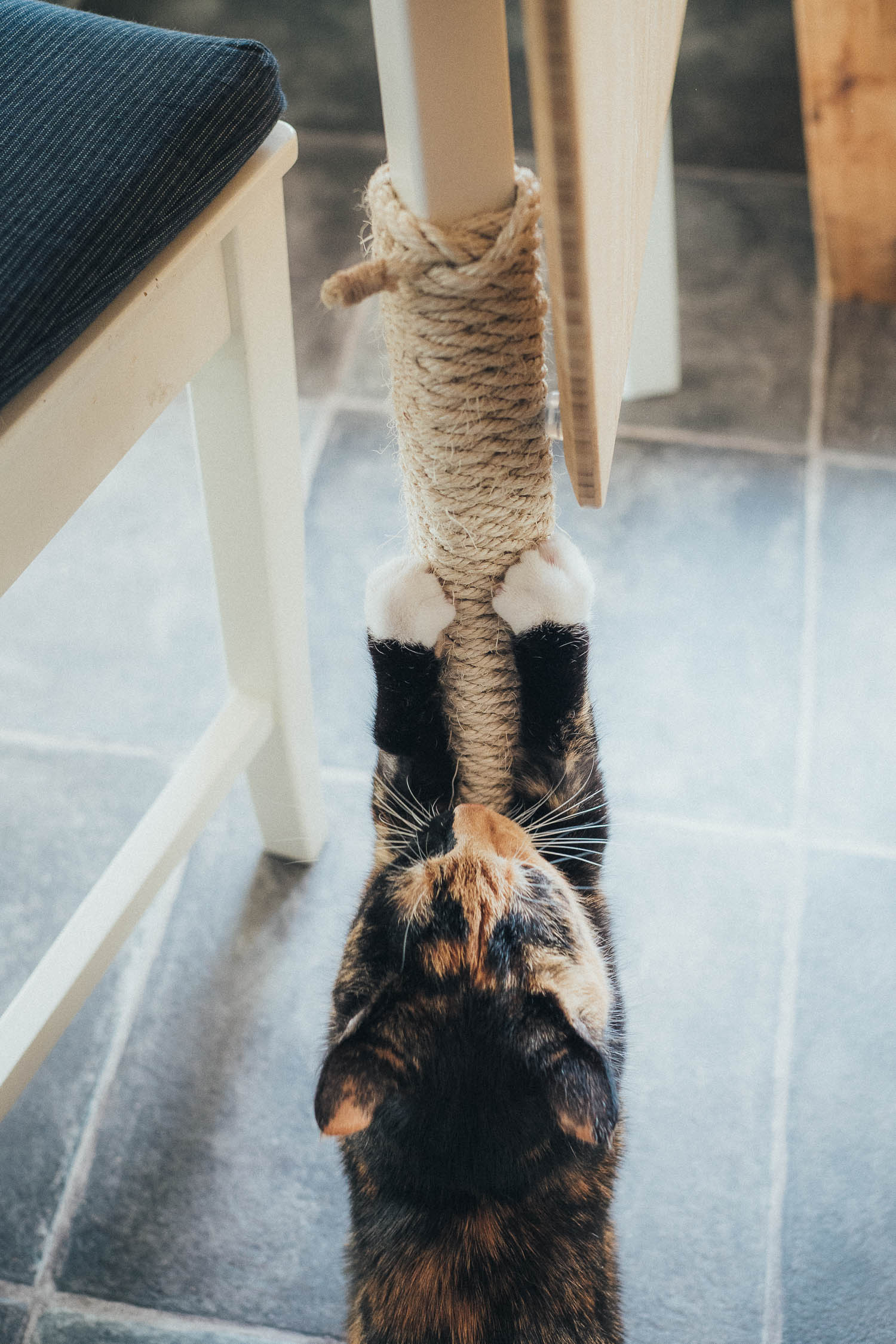 cat using a homemade scratch post