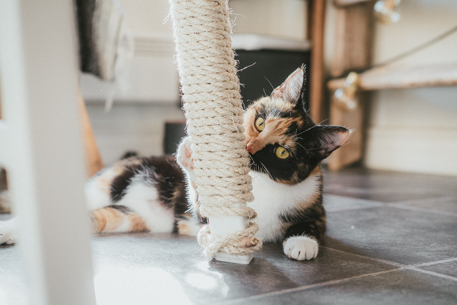 DIY Scratch Post for your cat