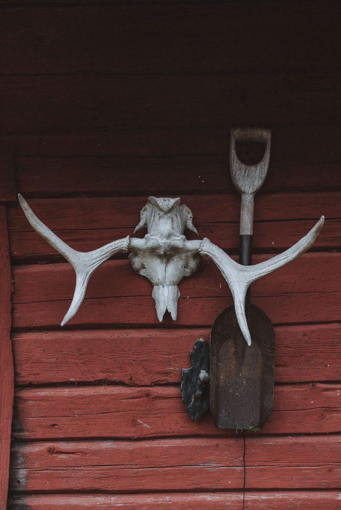 moose skull on cabin wall