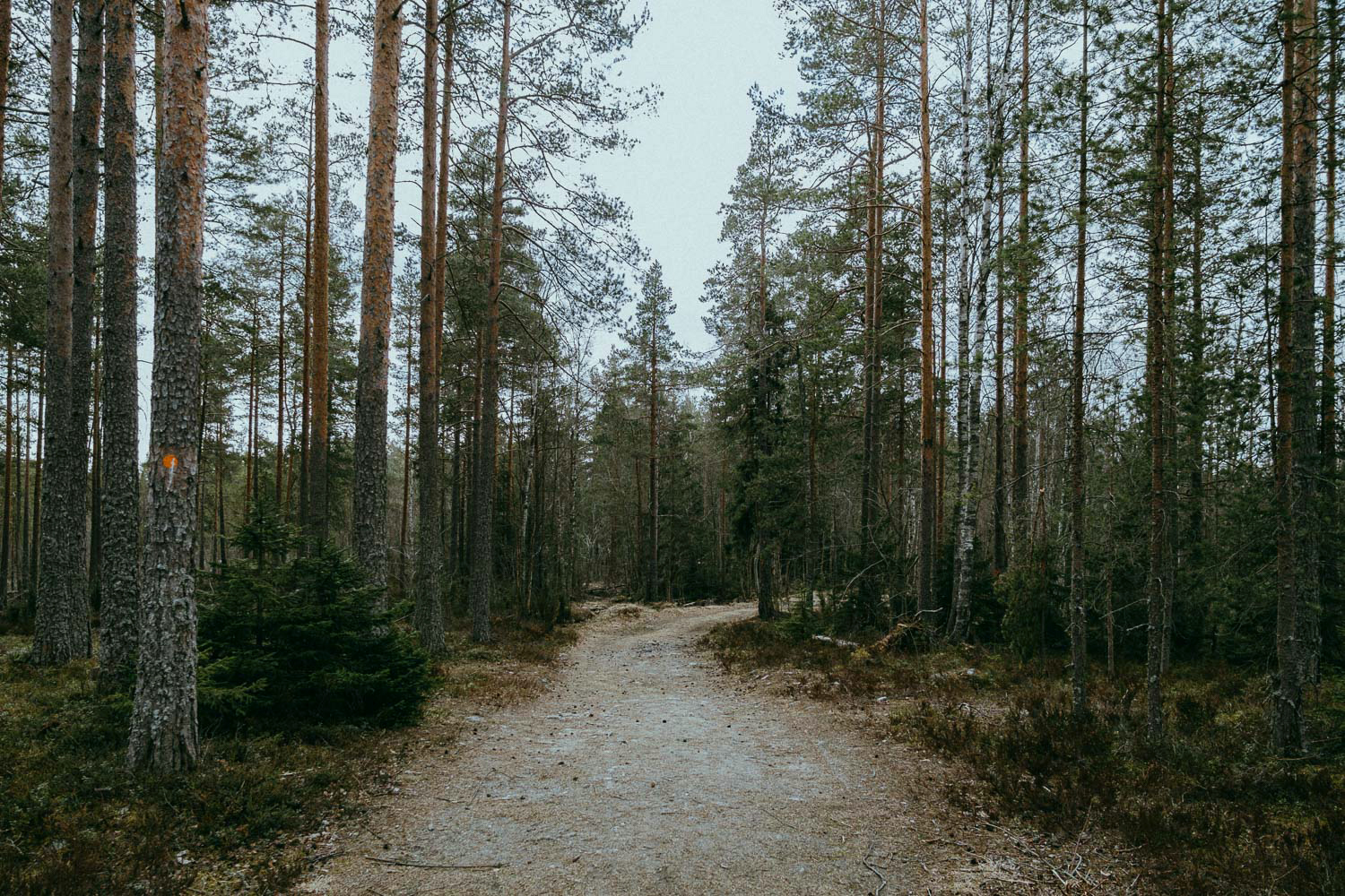 Wide path in a forest